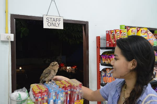 Owl at Kata Beach