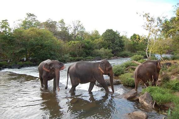 three bathing elephants Tad Lo Laos