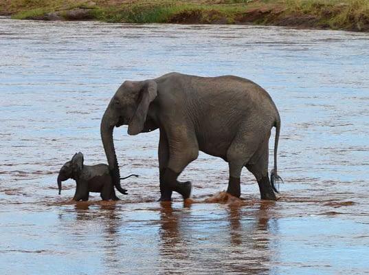 Samburu National Park - Elephants