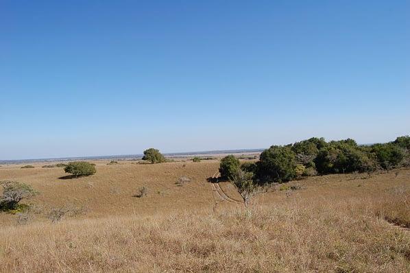 Desolation Maputo Elephant reserve