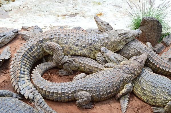 Mamba Village Crocodile Farm, Nairobi Best things to do