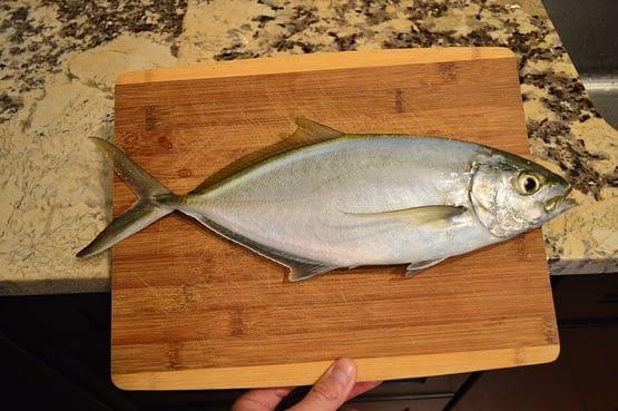 Jack Fish Grand Cayman