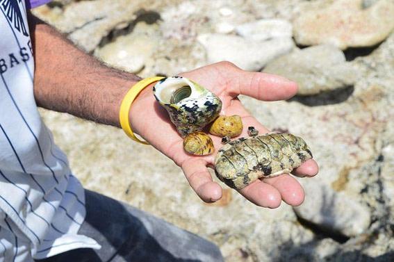 shellfish - Grand Cayman