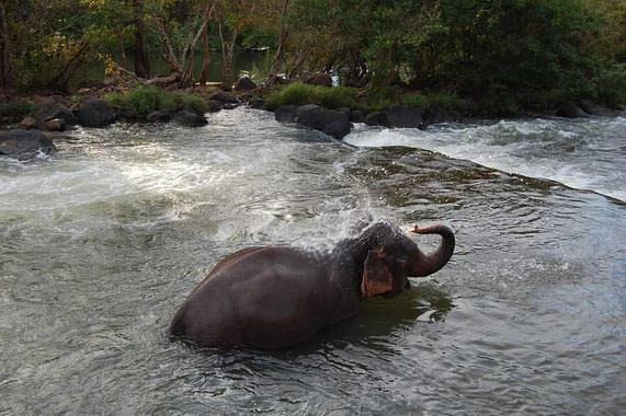 bathing elephant Tad Lo