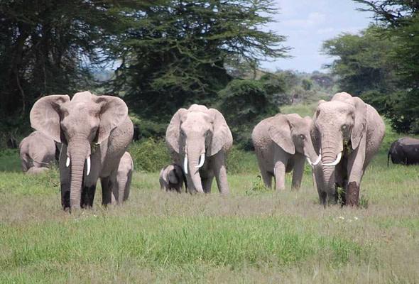 Amboseli National Park White Elephants
