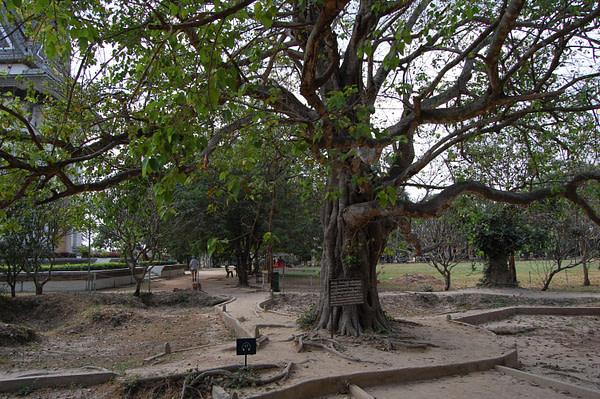Choeung Ek Chankiri Tree